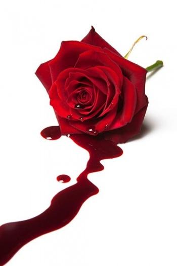 Фильм Ядовитая роза